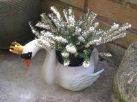 Garden - Swan Planter with White Heather