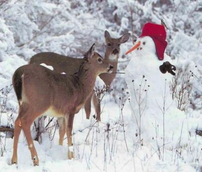 Deer Checking out Frosty's Nose