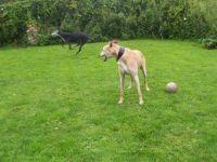 Winnie (13) teaching Doc to play.  First you run. .