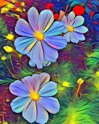 Cosmos Beauties