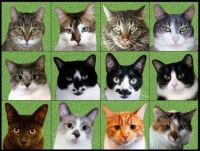 12 cats I know by RJay27