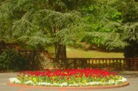 A display of red and yellow flowers on Belle Vue Park's terrace in springtime