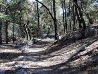 Rhyolite Canyon Trailhead