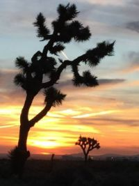 Joshua Tree Morning