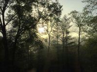 Sun breaking through early morning fog