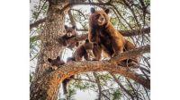 bear family by Tavita Tata