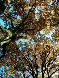 Pohled do korun stromů