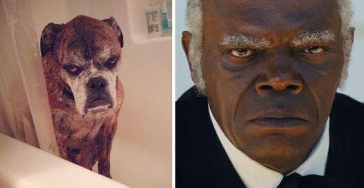When Celebrities Look Like Their Pets
