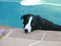 Jake The Border Collie: R.I.P.