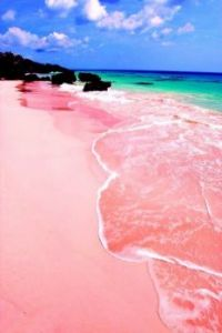Pink sands of Bermuda