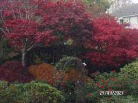 More Autumn  colour