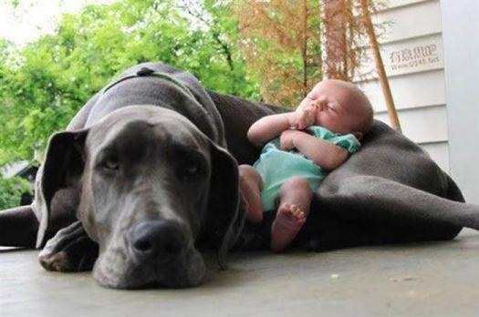 Unpaid Baby Sitters