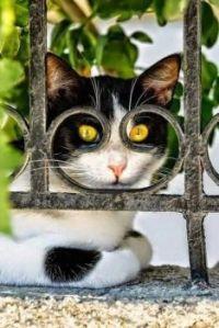 Cat Goggles