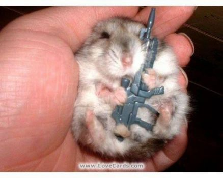 hampster with a gun
