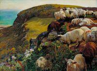 Sheep gone Awry