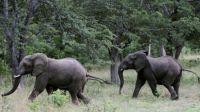 Zimbabwe plans to pay off its decades old debt to China with elephants