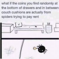 Spiders :-)