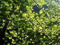 Juicy green of summer