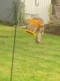 My squirrel-proof bird feeder
