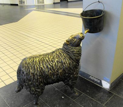 Schaap (pic:taken in hospital )