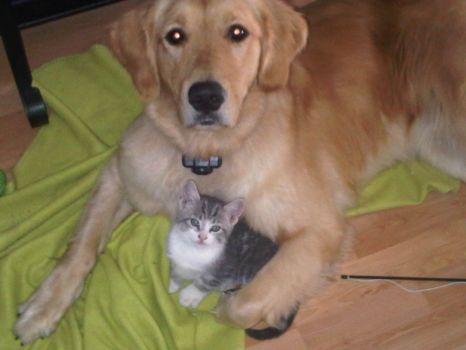Meggie & Kitten Ozzie