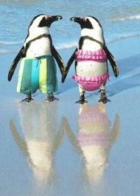 Penguins on the beach! Adorable couple....