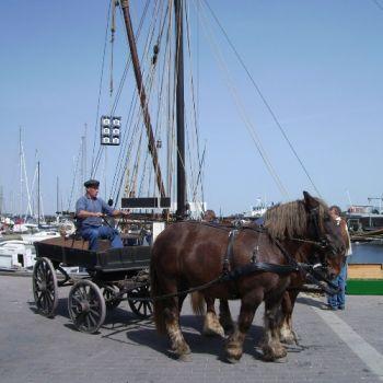 arbejdsheste ved havn