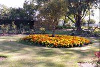 Marigolds Providing Splash of Colour