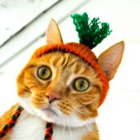 Carrot Hat for Murphy?