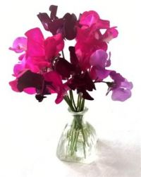Sweet peas in a small glass vase