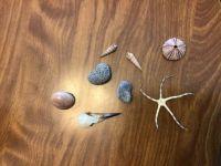 Shells I found