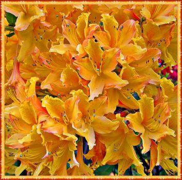 Golden Petals.