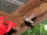 hummers 7-28-2015 051