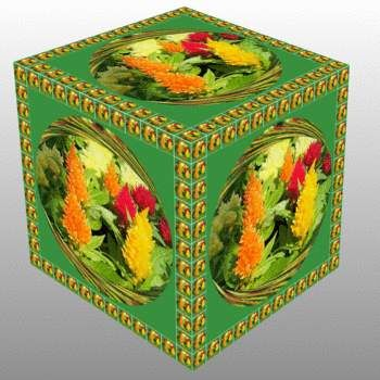 Nevadlec v krychli...  Celosia argentea in a cube...