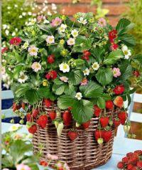 Very Berry Basket
