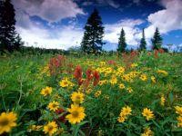 Lovely meadow