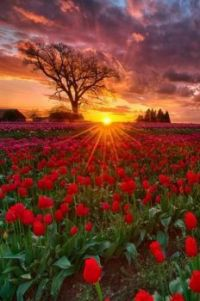 Slunce_Sun