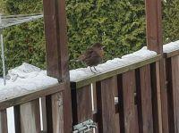 Bird in our backyard