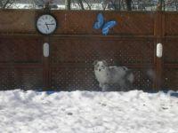 Sheila in Snow