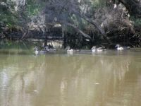 Collie River - Australind WA - Wildlife