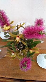 Pink Bottlebrush and Orchids in Bay of Plenty Garden
