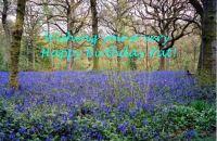 Happy Birthday Pat (pkin38)