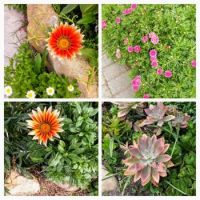 My Own Garden...Daisies and Succulents