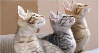 jigidi...three kittens