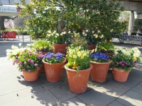 Spring in Kew Garden, London