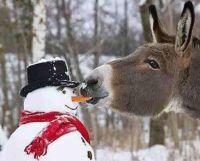 Donkey eats snowman's nose!!