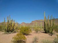 Organ Pipe National Monument - Arizona