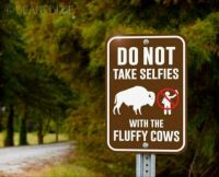 Fluffy cows :-)