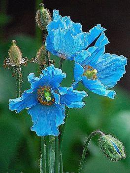 Prachtig blauw.