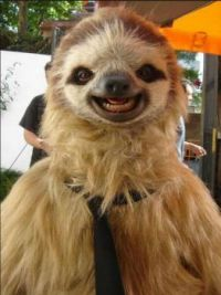 'Surprisingly Photogenic Sloth'